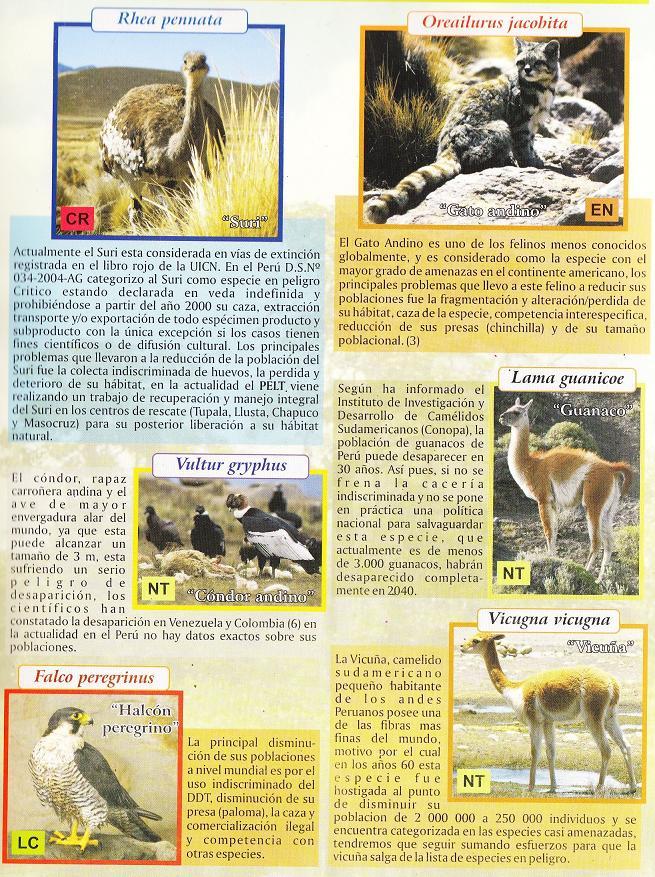 animales de Puno en extincion
